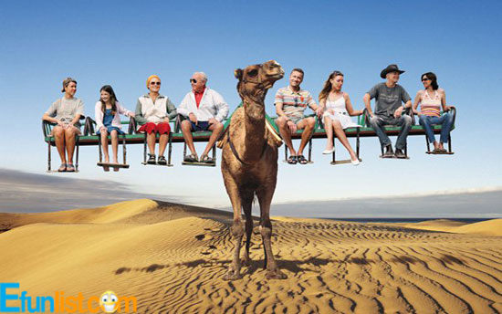 Funny-Travel-Of-Desert