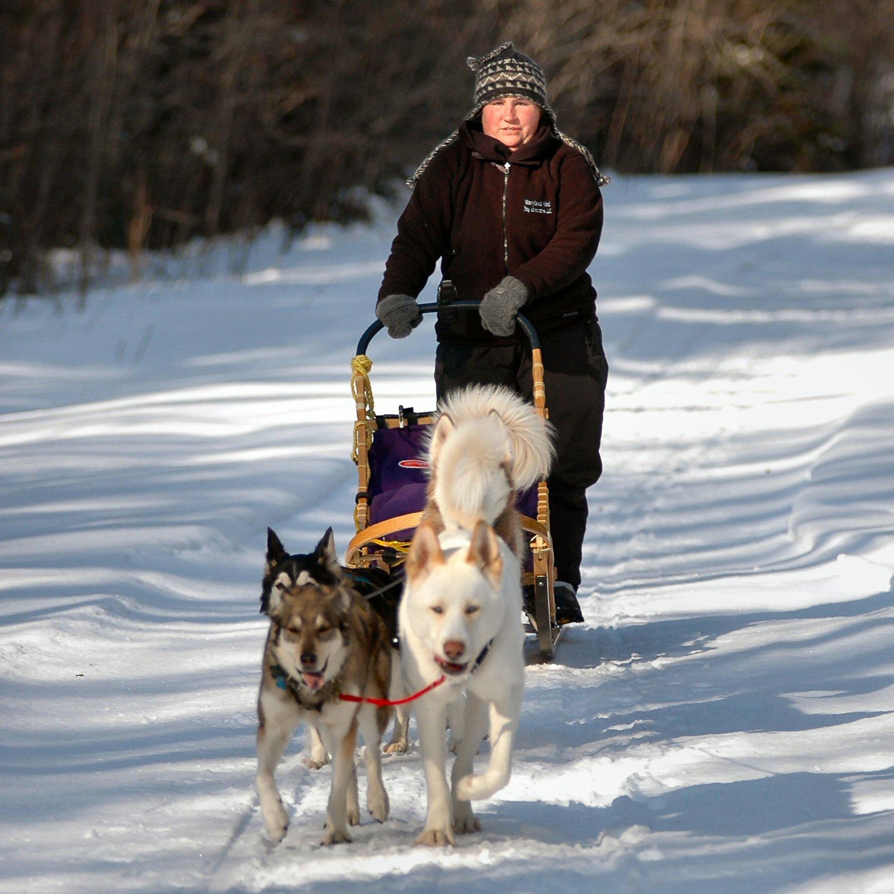 dog sledding - HD1778×1778